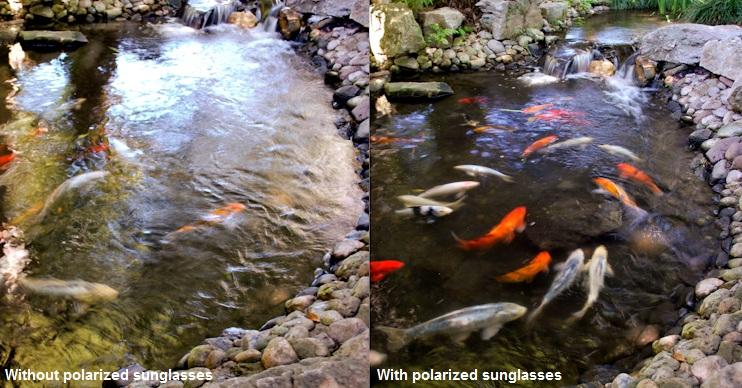 2ef249779f ... polarized sunglasses will catch you more fish. photo by  FashionEyewear